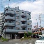 青秋桜(ブルーコスモス)